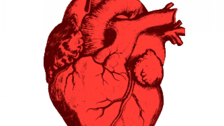 Jeśli biegasz w maratonach, nigdy nie umrzesz na serce? Serce sportowca, a serce osoby nietrenującej