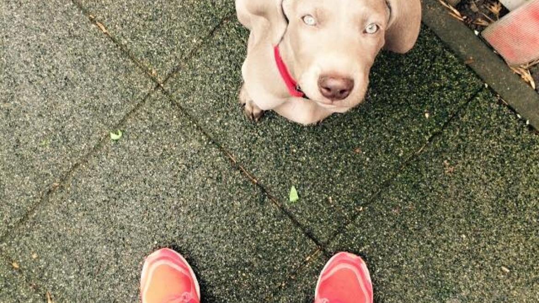 Bieganie kontra groźny pies. Co zrobić w razie niebezpieczeństwa?