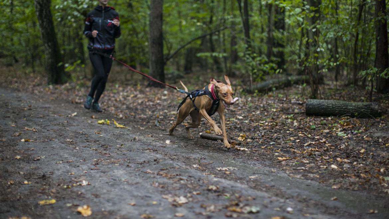 Canicross, czyli bieganie z psem