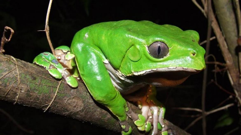 Jak Kambo zmieniło moje życie, czyli o moim uzdrowieniu dzięki jadowi żaby amazońskiej
